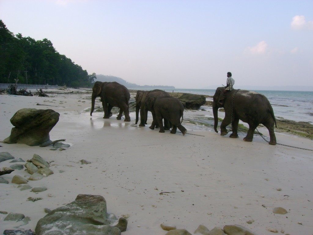 Elephants at Vijaynagar Beach