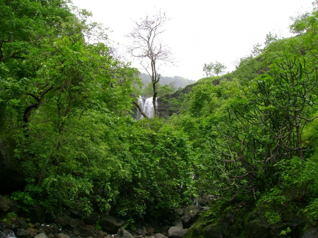 A glimpse of waterfall through forest cover
