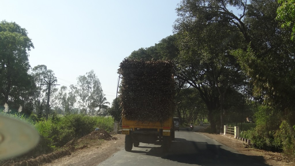 Tractor full of Sugarcanes