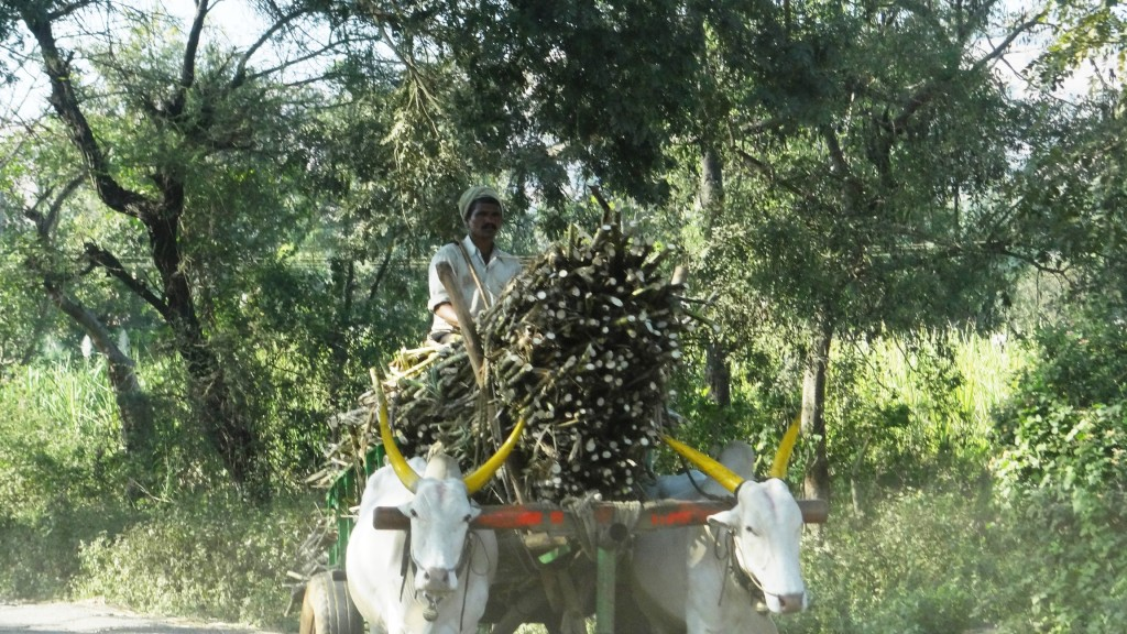 Cart loaded with Sugarcane
