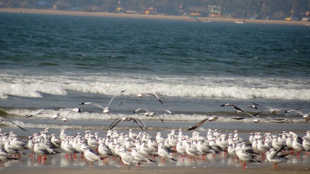 seagulls11