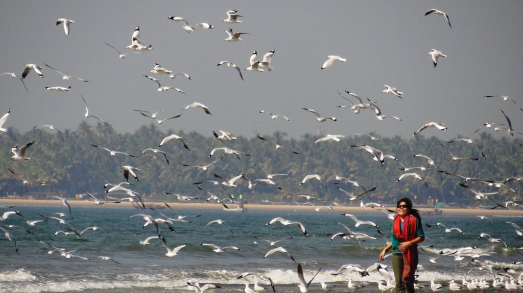 seagulls7