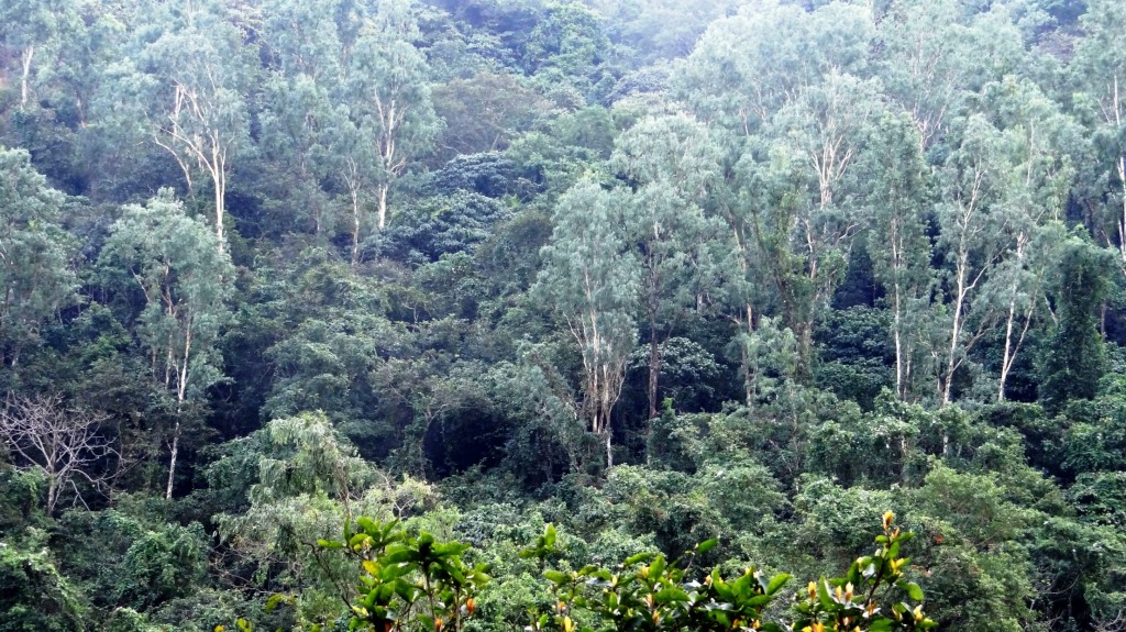 Radhanagari Forest