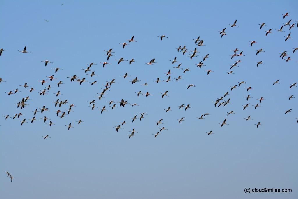 Flock flying in pattern