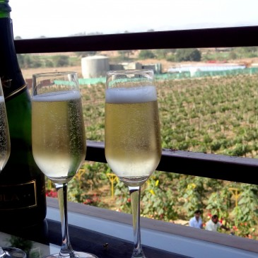 Sula Vineyard – Exquisite Indian Winery