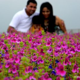 Kaas Plateau – The Valley of Flowers!