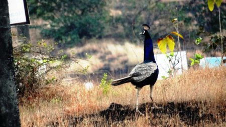 Chincholi Morachi – House of Peacocks & Agri Tourism