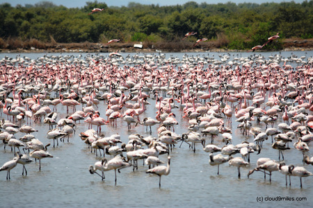 Flamingos – A delightful guest!!!