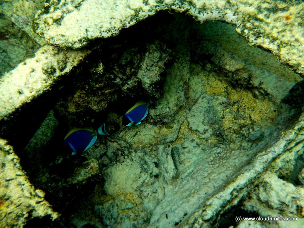 Snorkeling (19)