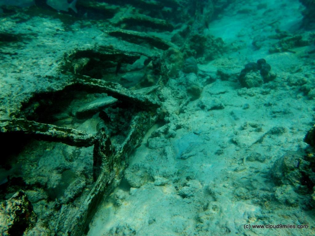Snorkeling (21)