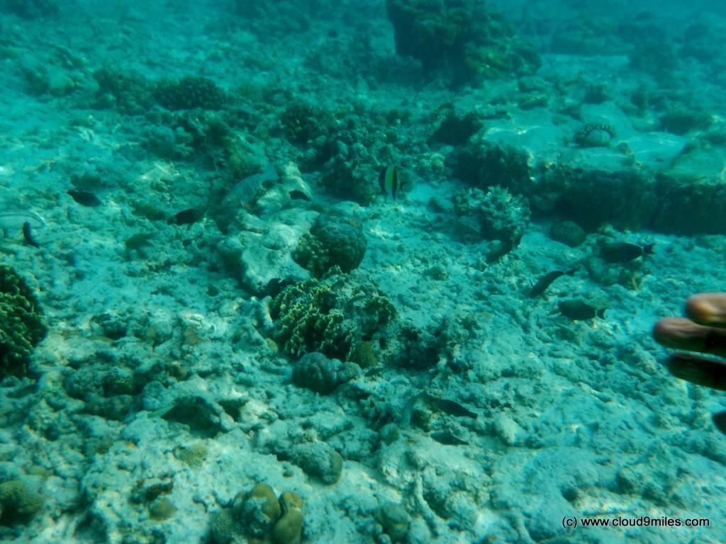 Snorkeling (27)