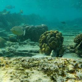 Shipwreck Snorkeling – Bangaram Island
