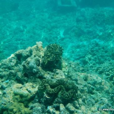 Scuba Diving – Kadmat Island