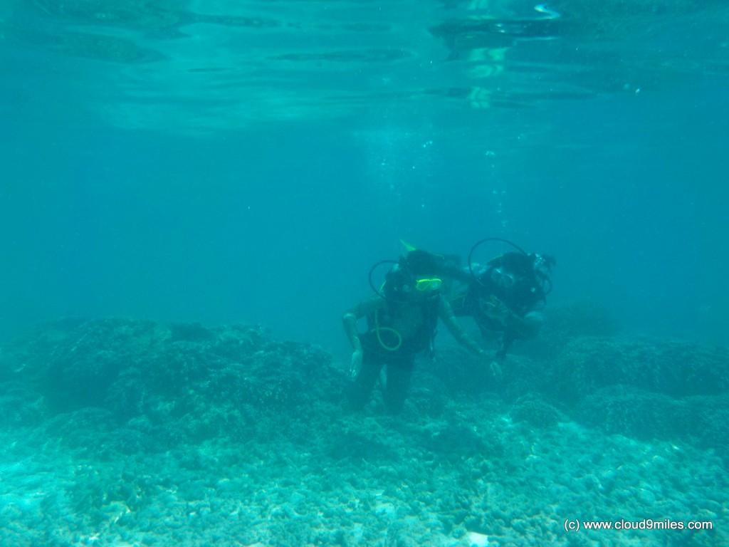 scuba (33)
