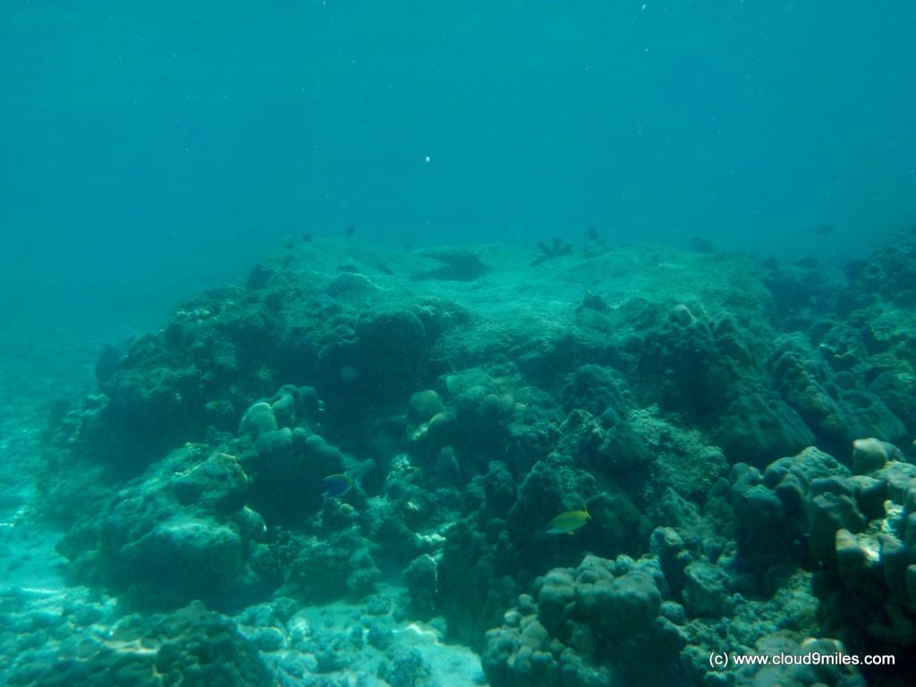 scuba (7)