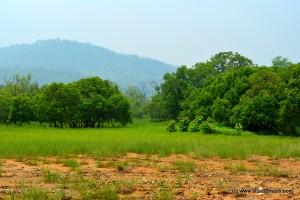 Grassland!