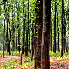 Jim Corbett – A nature's trail!!!