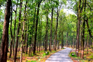 A journey through dense Sal Forest!