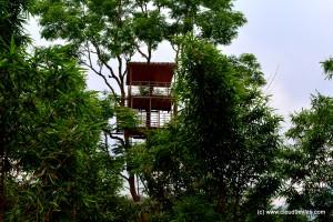 An upcoming tree resort!