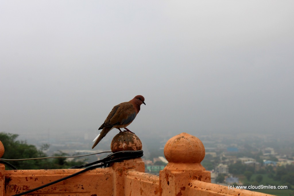 neemrana fort (31)