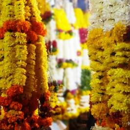 Flower Market – Solapur!