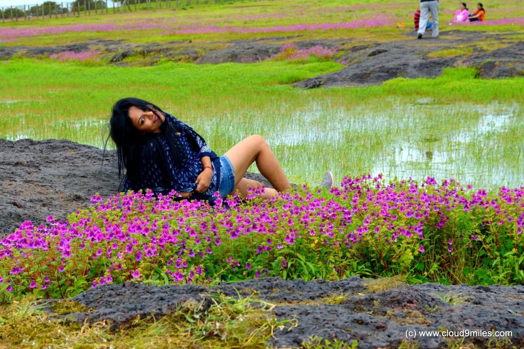 karvi-flower-18