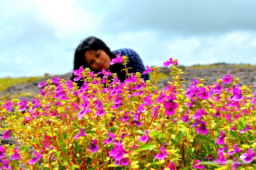 karvi-flower-19